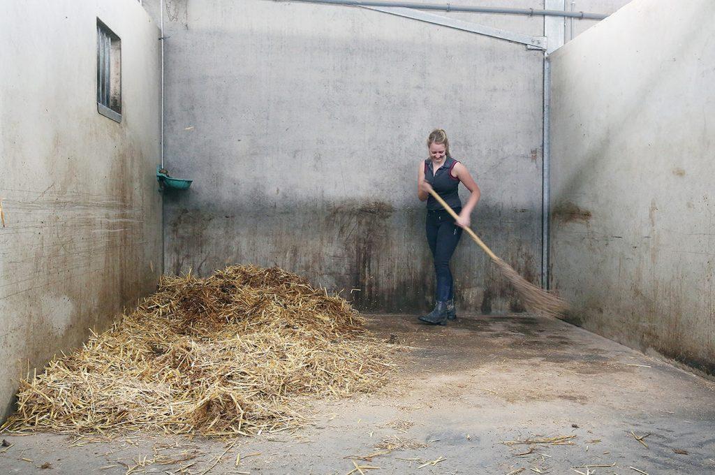 Hygiene paardenpension