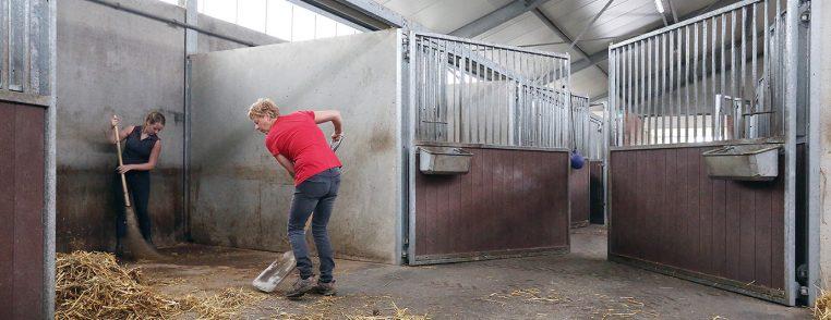 hygiëne in en om de paardenstal